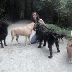 dog-walking-meute-bonheur