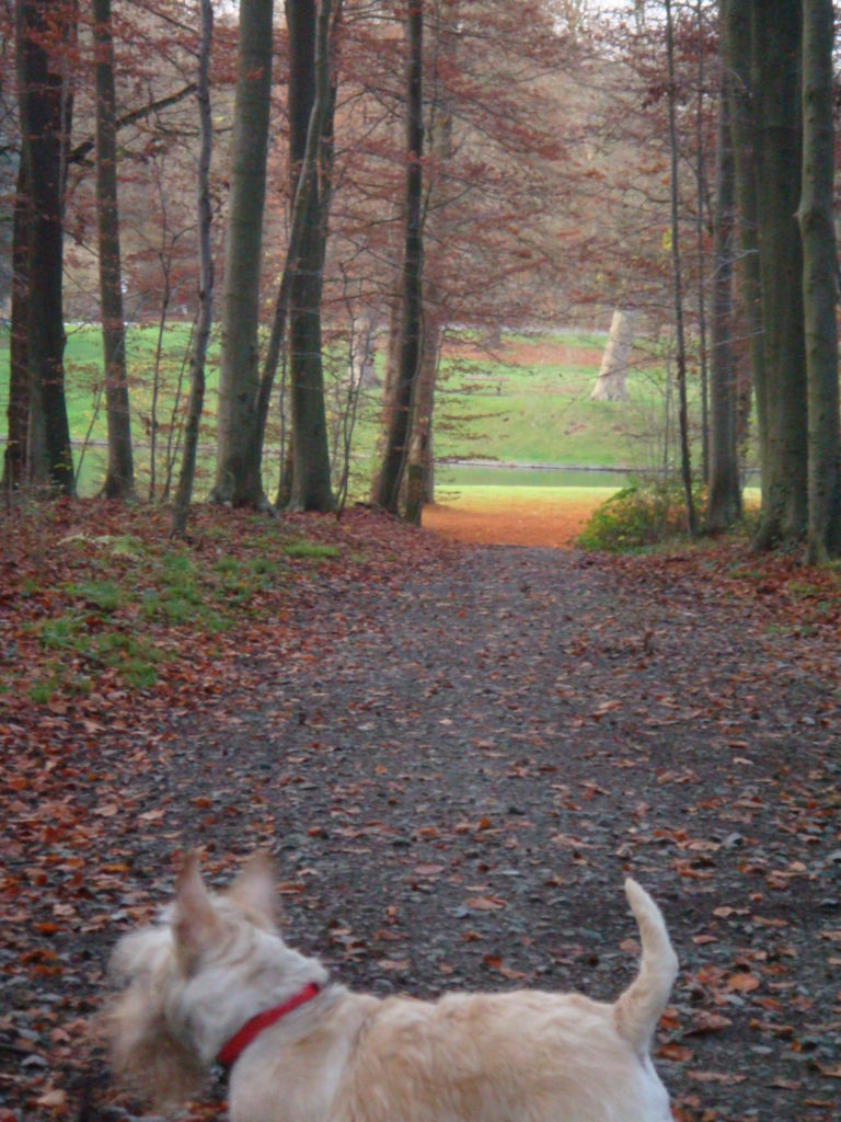 TheDogNanny-Dog-Walking-Cat-Sitting-Brussels-Parc-de-Tervuren-Arc-En-Ciel