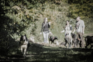 doggy-day-care-creche-chiens-dog-sitting-bruxelles-brussels